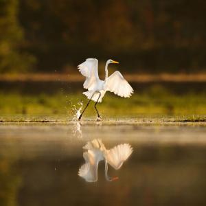 Marsh & Egret Photo Cropped 500x500-01