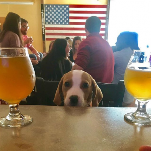 Puppy at Bar